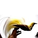 Cendrawasih Papua